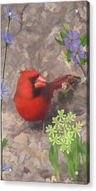 Cardinal Springtime Acrylic Print by Debra     Vatalaro