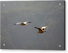 Acrylic Print featuring the photograph Carmel Birds In Flight  by Harvey Barrison