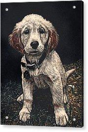 Carmen The Puppy Acrylic Print by Robert Goudreau