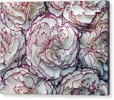 Carnations Flowers Acrylic Print by Dragan Todorovic