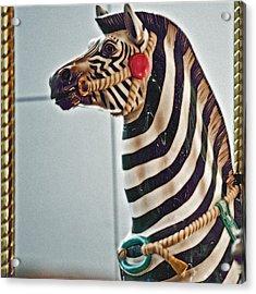 Carousel Zebra Acrylic Print by Bill Owen