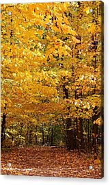 Carpet Of Leaves Marks The Path Acrylic Print by Bruce Bley