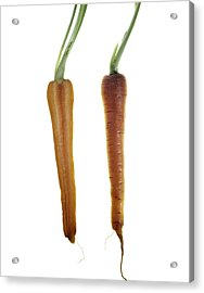 Carrot Acrylic Print by Nathaniel Kolby