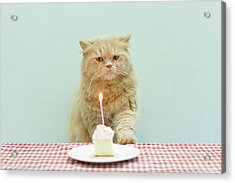 Cat About To Bllow A Candle Acrylic Print by Nga Nguyen