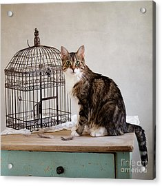 Cat And Bird Acrylic Print by Nailia Schwarz