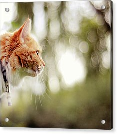 Cat And Bokeh Background Acrylic Print by Maria Kallin