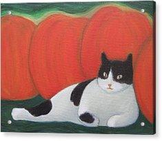 Cat And Pumpkins  Acrylic Print