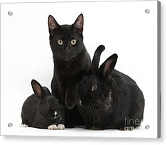 Cat And Rabbits Acrylic Print by Mark Taylor