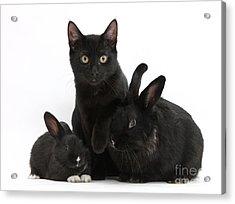 Cat And Rabbits Acrylic Print by Mark Taylor