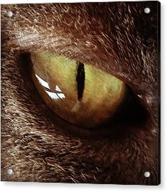 Cat Eye Acrylic Print