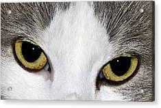 Acrylic Print featuring the photograph Cat Eyes by David Lester