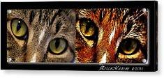 Cat Eyes Acrylic Print by EricaMaxine  Price
