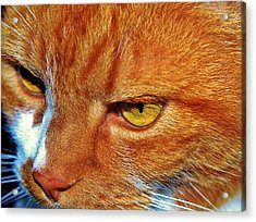 Cat Eyes Acrylic Print by Werner Lehmann