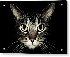 Cat Face Acrylic Print by by Jonathan Fife