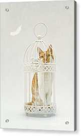 Cat In A Birdcage Acrylic Print by Catherine MacBride