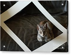 Cat In A Frame Acrylic Print by Micah May