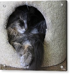 Cat In A Hole Acrylic Print by Mary-Lee Sanders