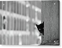 Cat In Cemetery Acrylic Print by All copyrights reserved by Harris Hui