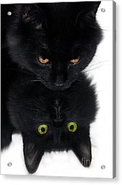 Cat In The Mirror Acrylic Print by Graham Taylor