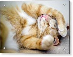Cat Is Sleeping Acrylic Print by Sebastian Brzezinski