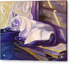Cat Nap In The Office Acrylic Print by Susan A Becker