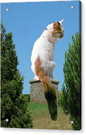 Acrylic Print featuring the photograph Cat On Pedestal by Bonnie Muir