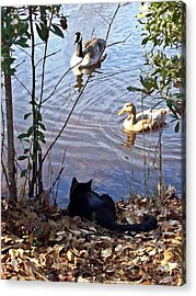 Cat Play Acrylic Print by Joan Meyland