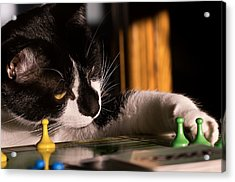 Cat Playing A Game Acrylic Print