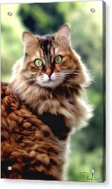 Cat Portrait Acrylic Print
