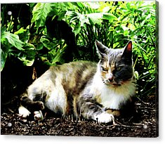 Cat Relaxing In Garden Acrylic Print by Susan Savad