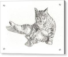 Cat Sitting Acrylic Print