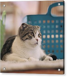 Cat Sitting On Floor Acrylic Print by Jiyeon-Agnes, Lee loves Analog images by Films!