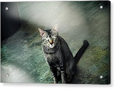 Cat Sitting On Floor Acrylic Print by Raj's Photography