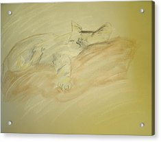 Cat Sketch Acrylic Print