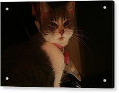 Cat The Majestic Acrylic Print by Eduardo Bouzas
