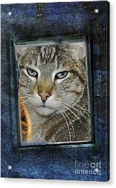 Cat Through A Tiny Window Acrylic Print by Mary Machare