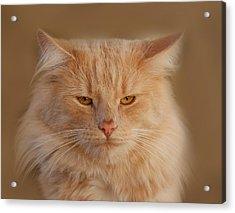 cat Acrylic Print by Waldek Dabrowski