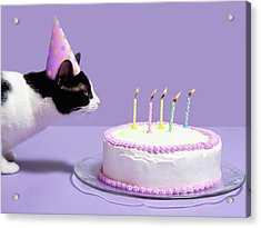 Cat Wearing Birthday Hat Blowing Out Candles On Birthday Cake Acrylic Print by Steven Puetzer