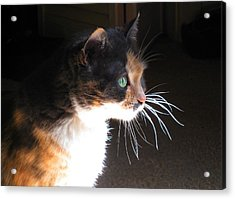 Cat Whiskers Acrylic Print by Sue Halstenberg