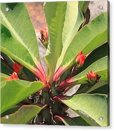 Catch Of The Day, One More Tropical Acrylic Print
