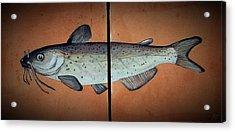 Catfish Acrylic Print by Andrew Drozdowicz