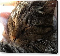 Acrylic Print featuring the photograph Catnap by Dale   Ford