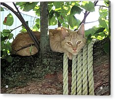Acrylic Print featuring the photograph Catnap Time by Thomas Woolworth