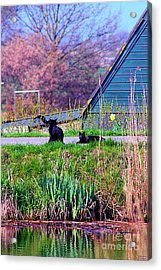Cats At The Canal Acrylic Print