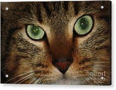 Cat's Eye Acrylic Print by Yumi Johnson