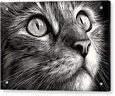 Cat's Face Acrylic Print by Elena Kolotusha