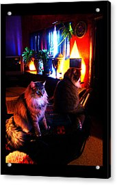 Acrylic Print featuring the photograph Cats On A Drum by Susanne Still