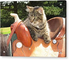 Cats Ride Free Acrylic Print