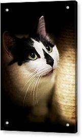 Catsablanca Acrylic Print by JM Photography