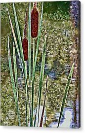Acrylic Print featuring the photograph Cattails Along The Pond by Don Schwartz